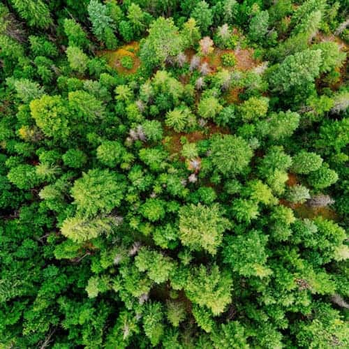 aromacy környezetvédelem